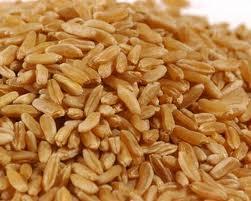 cereales kamut