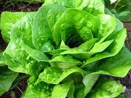 verdura De hoja