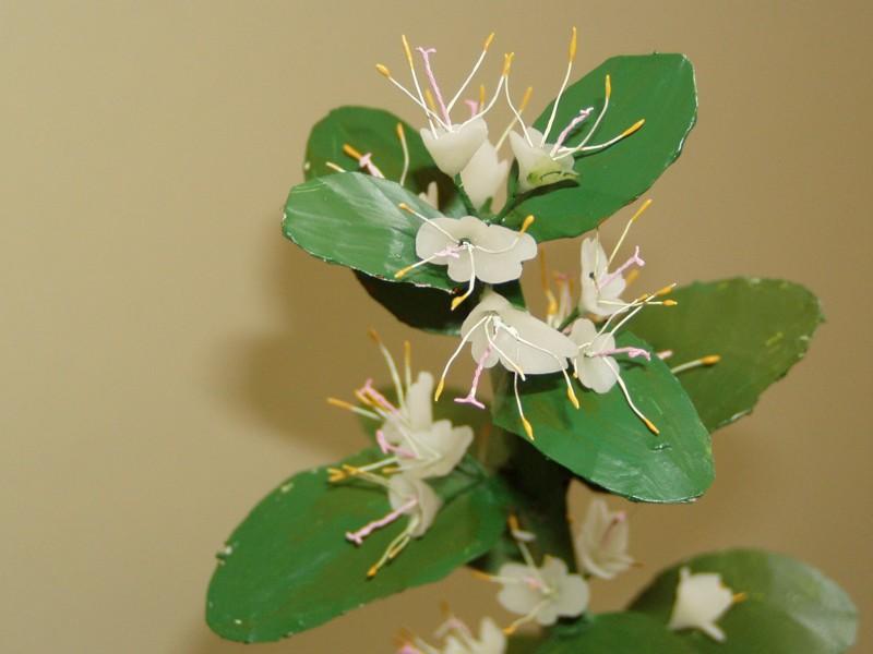 flores bilabiadas