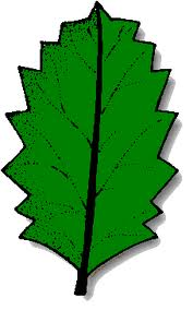 hojas dentadas
