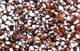 cereales sorgo